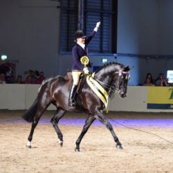 Equifest at the East of England Arena and Showground, Peterborough